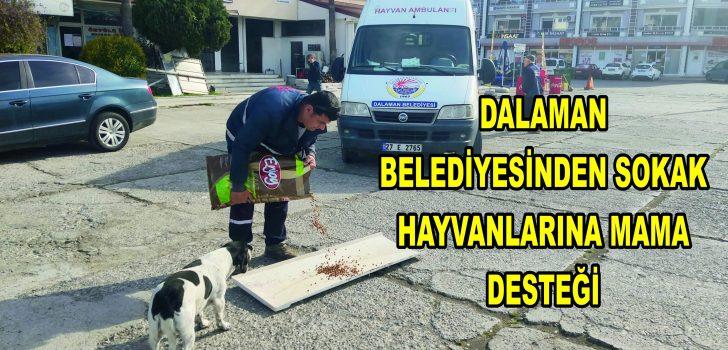 DALAMAN BELEDİYESİNDEN SOKAK HAYVANLARINA MAMA DESTEĞİ